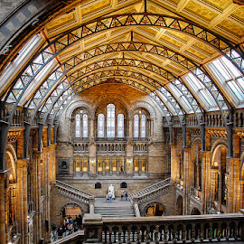 The Museum of Natural History by Matthew Haines - Buildings & Architecture Public & Historical