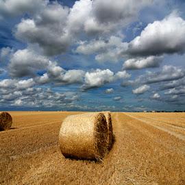 Alpacas redondas 8 by Eduardo Menendez Mejia - Landscapes Prairies, Meadows & Fields ( uk, redondas, paja, tokina 12-24, cambridgeshire, alpacas, menendez, eduardo, nikon, cambridge, d5100, inglaterra )