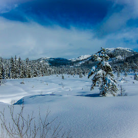 Winter  by Martin Jensen - Landscapes Forests ( hill, hills, snø, sky, tre, winter, blue, snow, pine )