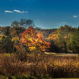 Burning Bush by Shari Brase-Smith - Landscapes Prairies, Meadows & Fields ( autumn, squaw creek, fall, dramatic, autumn colors )