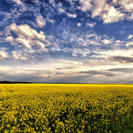Yellow and clouds ! by Marcel Socaciu - Landscapes Prairies, Meadows & Fields