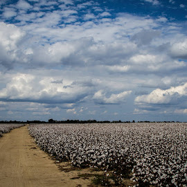 Delta Backroads by Trey Hensley - Landscapes Prairies, Meadows & Fields ( path, nature, landscape )
