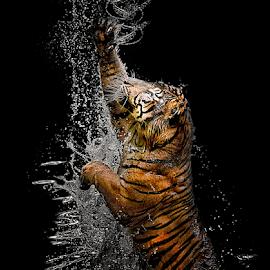 Dancing by Doeh Namaku - Animals Lions, Tigers & Big Cats