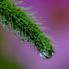 water drop by Cameron Knudsen - Nature Up Close Natural Waterdrops (  )