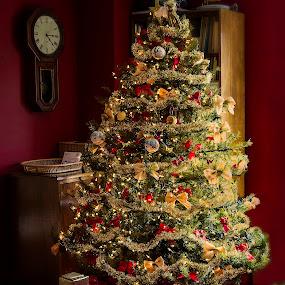Merry Christmas To You by Karen Celella - Public Holidays Christmas ( holiday, lights, lighting, tree, christmas, mood, mood factory, hanukkah, red, green, artifical, colors, Kwanzaa, blue, black, celebrate, tis the season, festive )