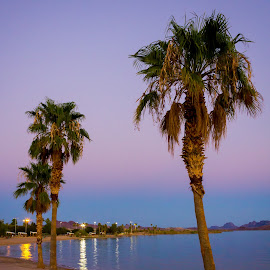 Lake Havasu by Eric Porter - Landscapes Beaches ( desert, sunset, arizona, palm trees, lake havasu, lake, beach,  )