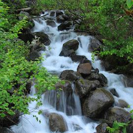 Rainforest Waterfall by Rhonda Silverton - Nature Up Close Leaves & Grasses ( waterfall, alaska, juneau, trees, forest, rocks, rainforest )