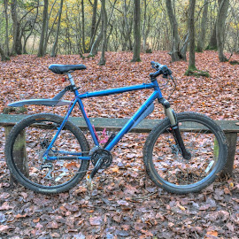 Mountain bike in woods by Jonathan Thomas - Sports & Fitness Cycling