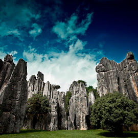 Stone forest by Mc Pujiyanta - Landscapes Caves & Formations