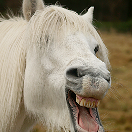 Having a laugh! by Faillie Photos - Animals Horses ( horses,  )