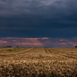 cornland by Ghimpe Cristian - Landscapes Prairies, Meadows & Fields