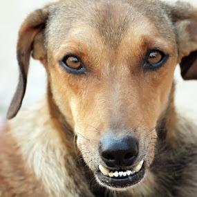 Look innocent but teeth dangerous  by Ashish Singla - Animals - Dogs Puppies