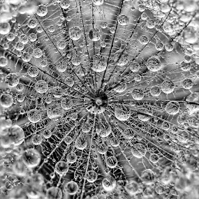 by Tanya Markova - Black & White Macro