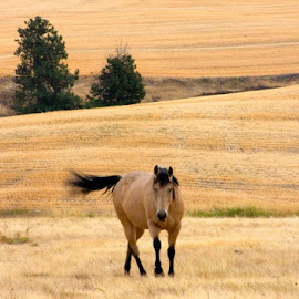 Love the wind in the tail. by Gale Perry - Animals Horses