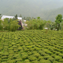 green valley by Sethi Kc - Nature Up Close Gardens & Produce ( green valley,  )