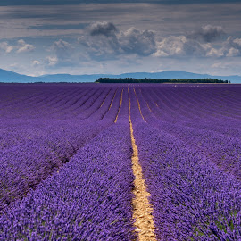 Lavender fields IV. by Igor Debevec - Landscapes Prairies, Meadows & Fields ( lavender,  )