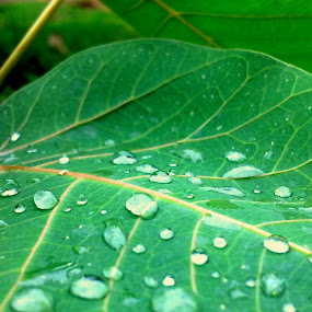 by Rana Ghosh - Nature Up Close Leaves & Grasses