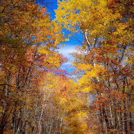 Fall Road in Minnesota by Gary Hanson - Nature Up Close Trees & Bushes ( northern, minnesota, colors, fall, trees, road,  )
