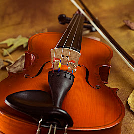 The wooden Beauty by Rakesh Syal - Artistic Objects Musical Instruments (  )