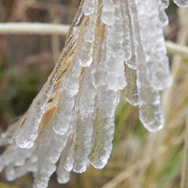 season first freeze, colorado by Ilona Williams - Novices Only Macro