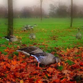 Kensington Park. by Michael Dalmedo - City,  Street & Park  City Parks