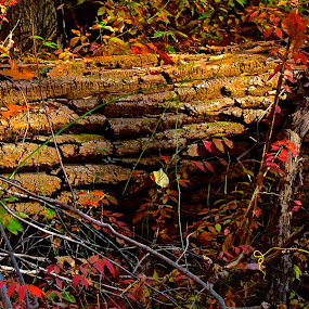 Fallen Tree by Carl Testo - Nature Up Close Trees & Bushes ( hcl, tree, autumn )
