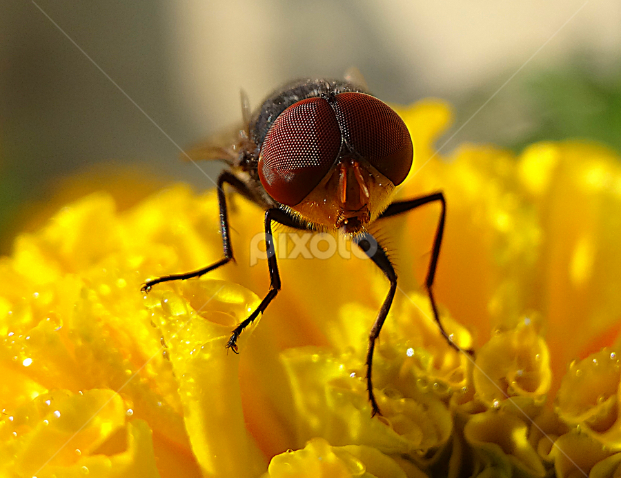 Eye by Umesh Halder - Animals Insects & Spiders ( macro, nature, compound eye, insect eye )
