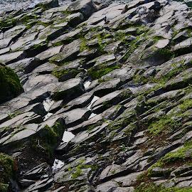 Rock and Moss by Waynette  Townsend - Nature Up Close Rock & Stone ( pattern, moss, stone, mossy, wet, natural, rocks,  )