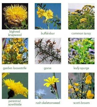 Weeds photo index