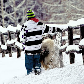 dog playing in the snow by Erik Pettinari - Animals - Dogs Playing ( snow, dog, italy, malamute day )