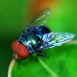 by Muhd RidzuanGom Ridzuan - Nature Up Close Hives & Nests