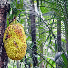 Jack Fruit by Jaliya Rasaputra - Nature Up Close Gardens & Produce ( fruit )