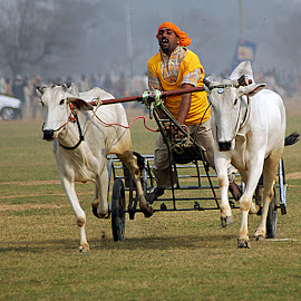 Heat #3 by Rakesh Syal - News & Events Sports ( sport man cows,  )