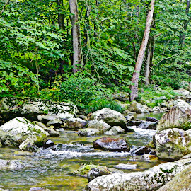 Crooked Creek by Eve Spring - Landscapes Forests ( water, stream, creek, trees, forest, leaves, woods, rocks )