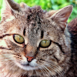 Cat by Luka Radulović - Animals - Cats Portraits ( cat, nature, color, portrait, eyes )