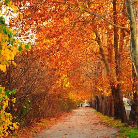 Golden autumn by Emil Georgiev - City,  Street & Park  City Parks ( park, autumn, trees, bg, varna, city, alley )