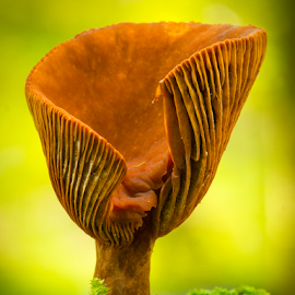 Funny Fungi by Peter Samuelsson - Nature Up Close Mushrooms & Fungi