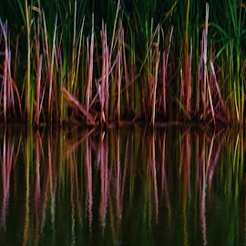 Marsh by Lori Kulik - Abstract Patterns ( abstract, water, grasses, waterscape, marsh )