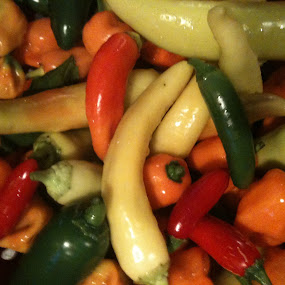 Hot Peppers  by Karin Pelton - Food & Drink Fruits & Vegetables