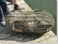 Новомосорське водосховище. Рибалка-UA