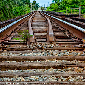 by Nancie Rowan - Transportation Railway Tracks