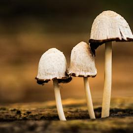 familys by Kawan Santoso - Nature Up Close Mushrooms & Fungi