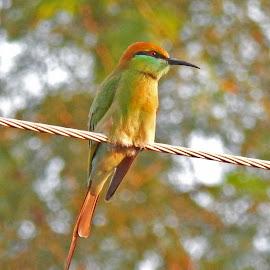 by Smarajit Saha - Animals Birds