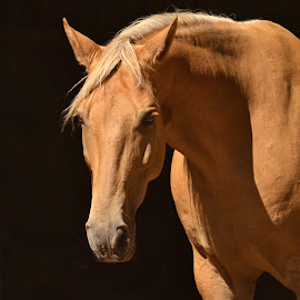 Golden by Michelle Hunt - Animals Horses ( horses )