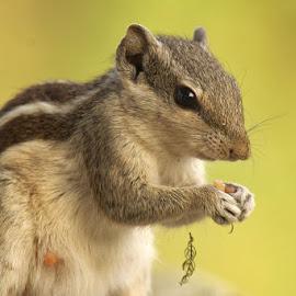 by Mukesh Chand Garg - Animals Other Mammals