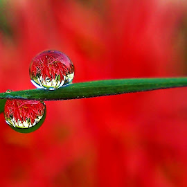 Twins Brother by Dhani Prasetya Yudhistira - Instagram & Mobile Other ( macro, dew )