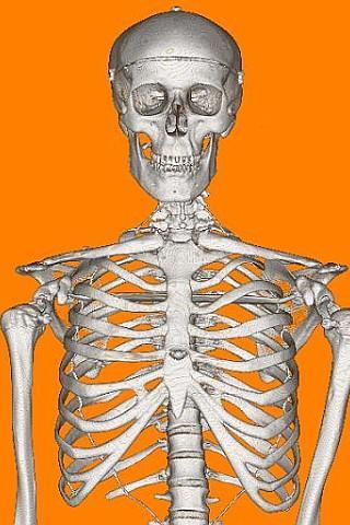 Halloween Wallpaper - Mr Bones