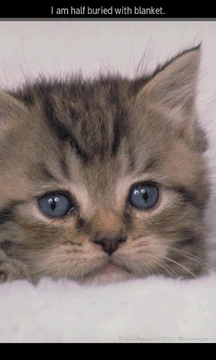 【免費書籍App】ipiks Love cats 3 Lite-APP點子