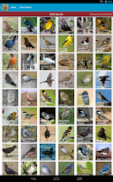 Screenshot of North American Birds Free