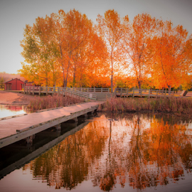 Wabuman City Park by Joseph Law - City,  Street & Park  City Parks ( in alberta, autumn, trees, reflections, city park, wooden bridge, fall color, wabuman )